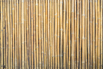 close up group of yellow brown bamboo background texture