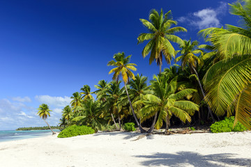 Recess Fitting Caribbean tropical beach with palms