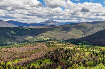 Helena Montana Summer Mountain Scene