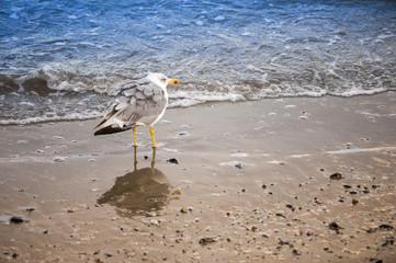 Gabbiano in riva al mare