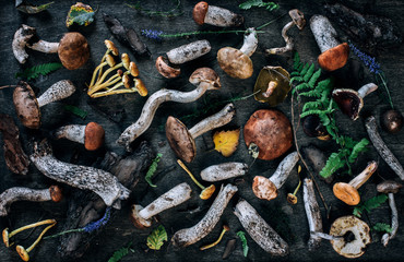 Varied forest mushrooms, top view