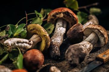 Mushrooms on a wooden stump