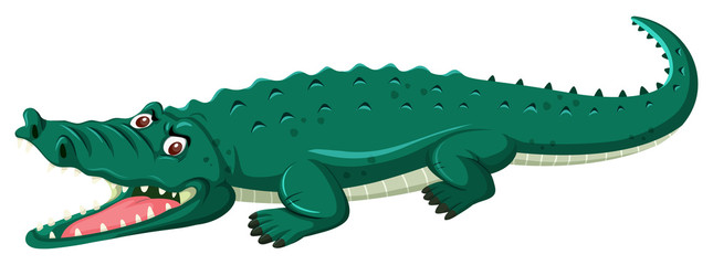 A crocodile on white background