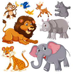 A set of wild animals