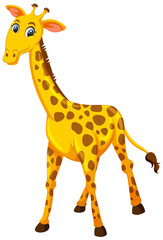 A giraffe on white background