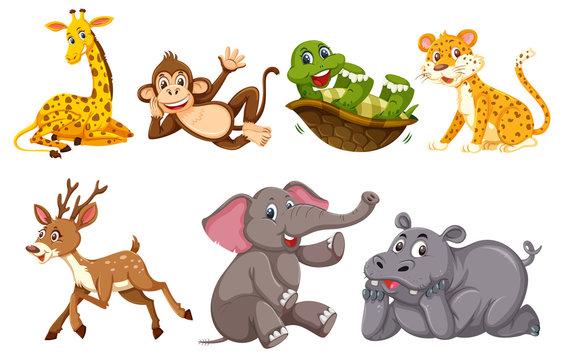 A set of wild animals