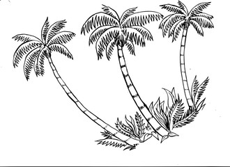 Nice illustration of some tropical palm trees