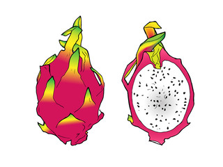vector line illustration color of pitaya. Isolated dragon fruit for label, menu, icon. Black line sketched hand painted fruits on white background. Whole and half of pitahaya