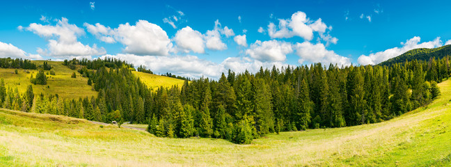 countryside panorama in early autumn. lovely landscape with spruce forest on the grassy hill. beautiful cloud formation above the distant ridge. warm and sunny weather