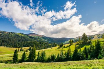 early autumn countryside in mountains. lovely landscape with spruce forest on the grassy hill. beautiful cloud formation above the distant ridge. warm and sunny weather