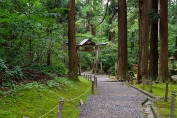 苔が美しい日本の神社の境内