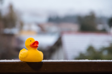 Rubber duck on balcony covered in snow