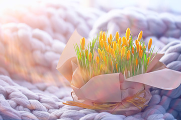 yellow wild flowers crocuses / bouquet of spring flowers, April gift, sunny morning