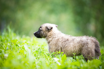 Mixed breed puppy in the grass, pet adoption concept