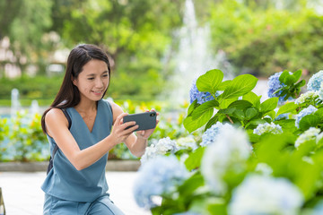 Woman taking photo with smart phone on Hydrangea garden park