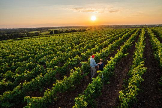 Top view. A winegrower and young son in their vines at sunset