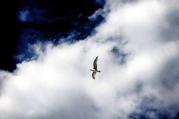 A seagull in the sky against the background of a cloud.