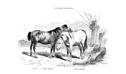 illustration of horse
