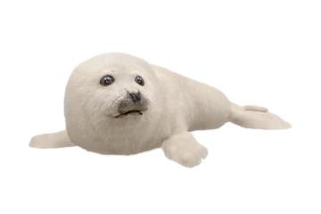 weiße Robbe freigestellt