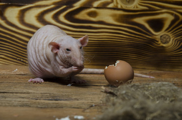 Decorative rat and chicken egg.