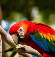 Photo of a scarlet macaw in a natural park in Cartagena, Colombia.