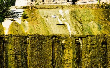 Piccione in volo sulla cascata di un fiume