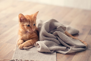 Young cute kitten on blanket