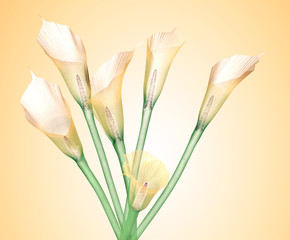 x-ray image of a flower isolated on yellowe , the Calla Lily