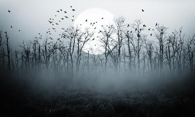 dark night forest  full moon