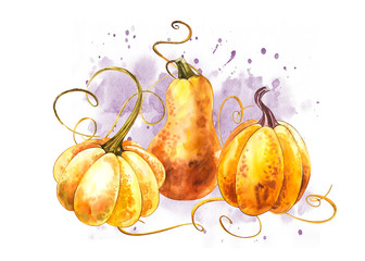 Pumpkins composition. Hand drawn watercolor painting on white background. Watercolor illustration with a splash. Happy Thanksgiving Pumpkin.