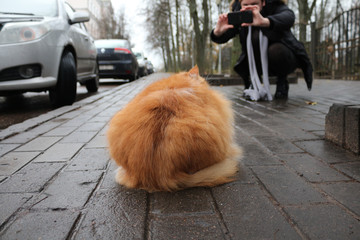 A person taking a shot of a cat on the street