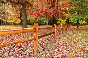 Beautiful autumn nature background. Scenic landscape with old style wooden logs fence between colorful trees in an autumn forest during rainy day. Colors of the fall.