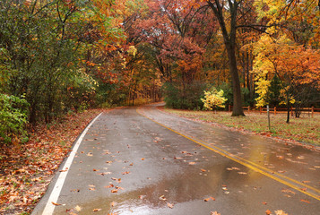 Beautiful autumn nature background. Landscape with wet road through the forest with colorful trees and fallen leaves. Wisconsin, Midwest USA. Colors of the fall.
