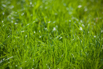 Closeup of green grass on blurred background
