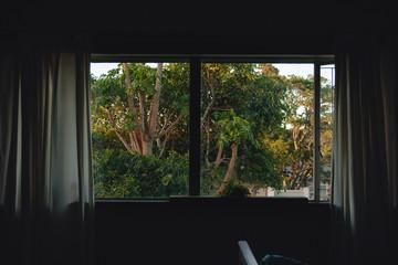 Window with papaya tree and sunlight through it