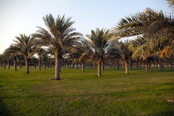 Palm Garden in the UAE.