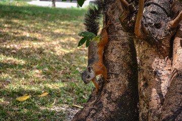 squirrel coming down from a tree