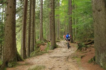 Bavarian forest, Radwandern um den großen Arbersee, lake great arbersee
