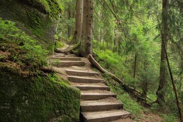 Bavarian forest, hiking aroud lake great Arbersee