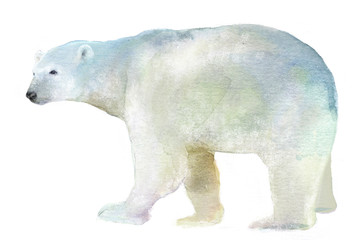 watercolor isolated illustration of a polar bear, drawing by the hand of a polar animal