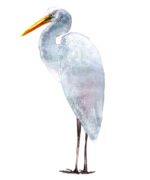 watercolor illustration of herons, isolated drawing from the hand of a bird stork