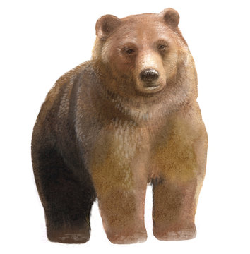watercolor illustration of a bear, isolated drawing by hand of a forest animal
