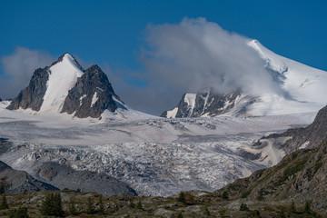 Wild nature of Altai mountains
