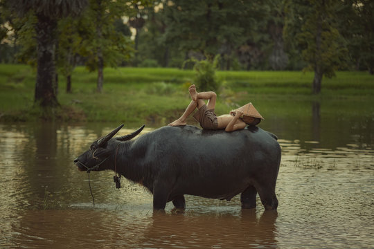 Asia children are sleeping on water buffalo at rural.