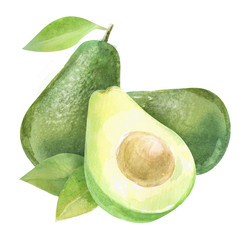 avocado, watercolor hand-drawn drawing of a fruits, isolated illustration on a white background
