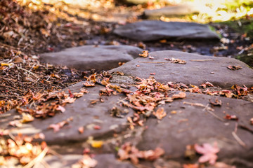 Fallen leaves on big stones during autumn