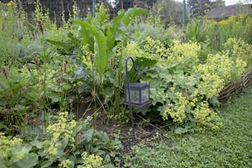 natural plant border