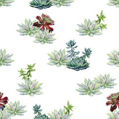 Watercolor succulents seamless pattern, echeveria illustration, botanical painting of dudleya and zwartkop. Stone rose. Sempervivum art. Elements for design of invitations, posters, fabrics.