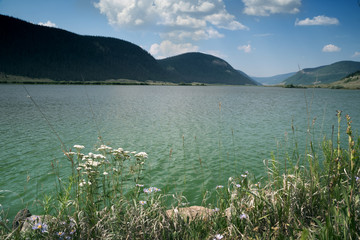 View of the lake through the grass and white yarrow flowers. Brown Lakes, Rio Grande National Forest,  Colorado, US