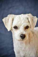 portrait of puppy close up